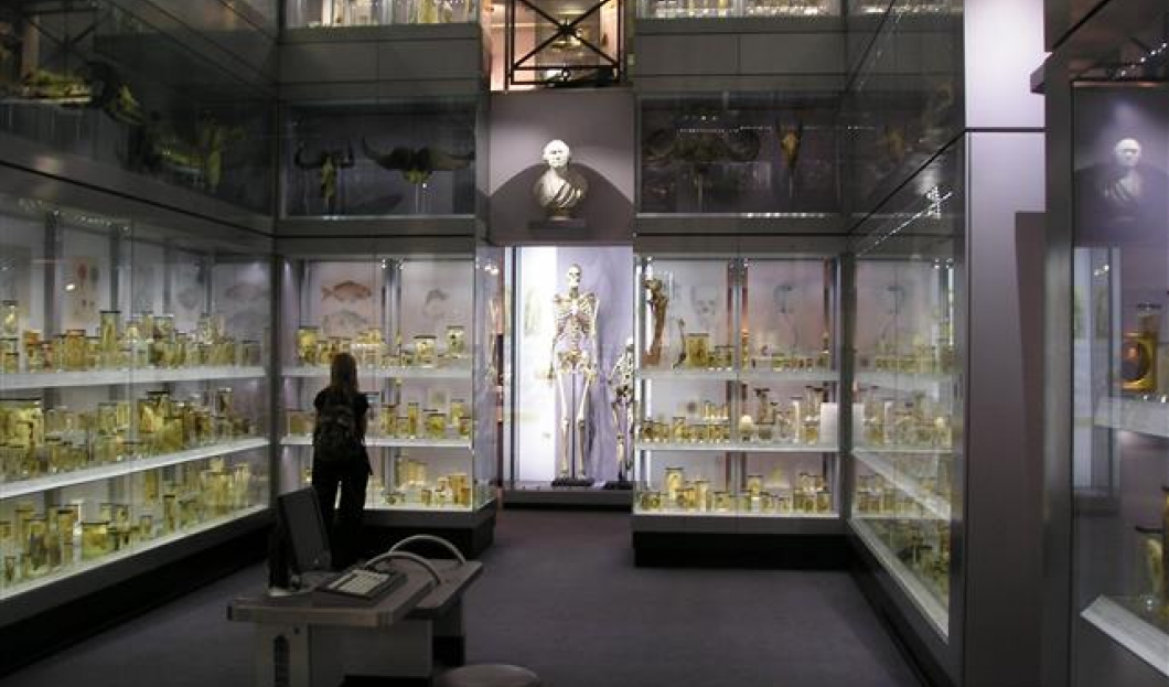 Musée Hunterian